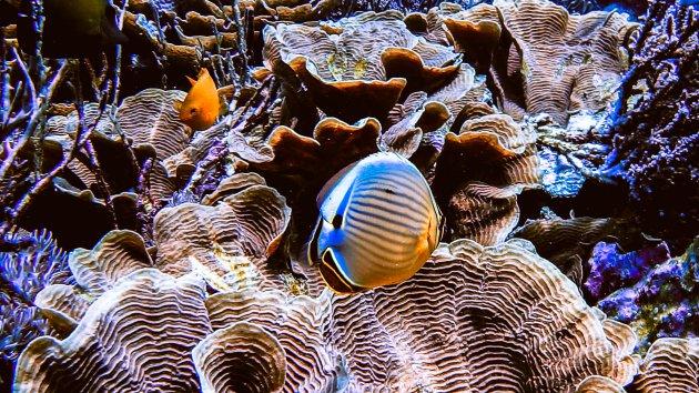 Kleuren onder water