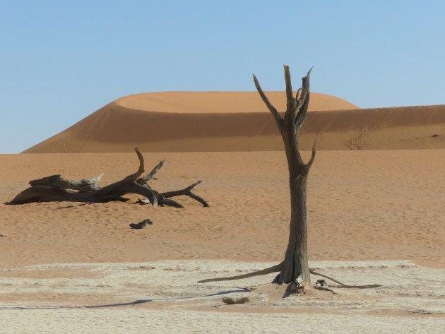 Eenzame boom in de Deathvlei