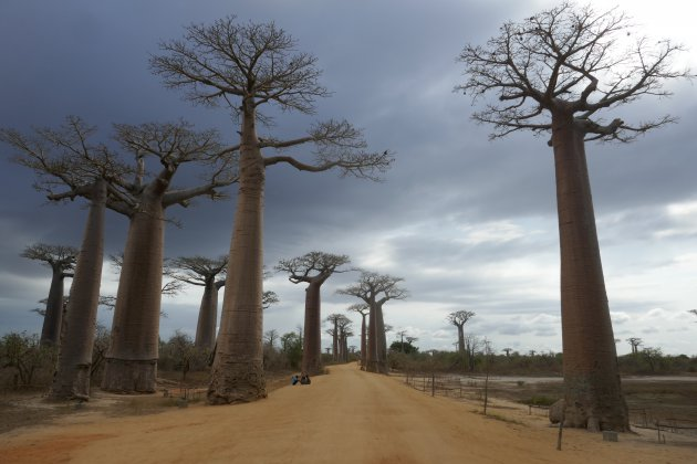 Ook met iets minder mooi weer, is de Baobab laan geweldig om te zien
