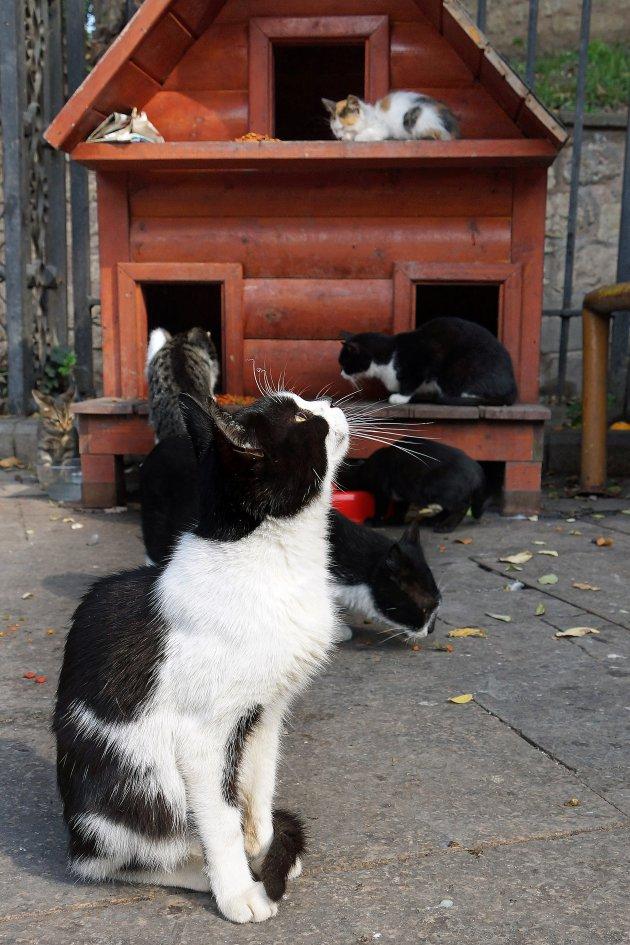 De katten en de profeet