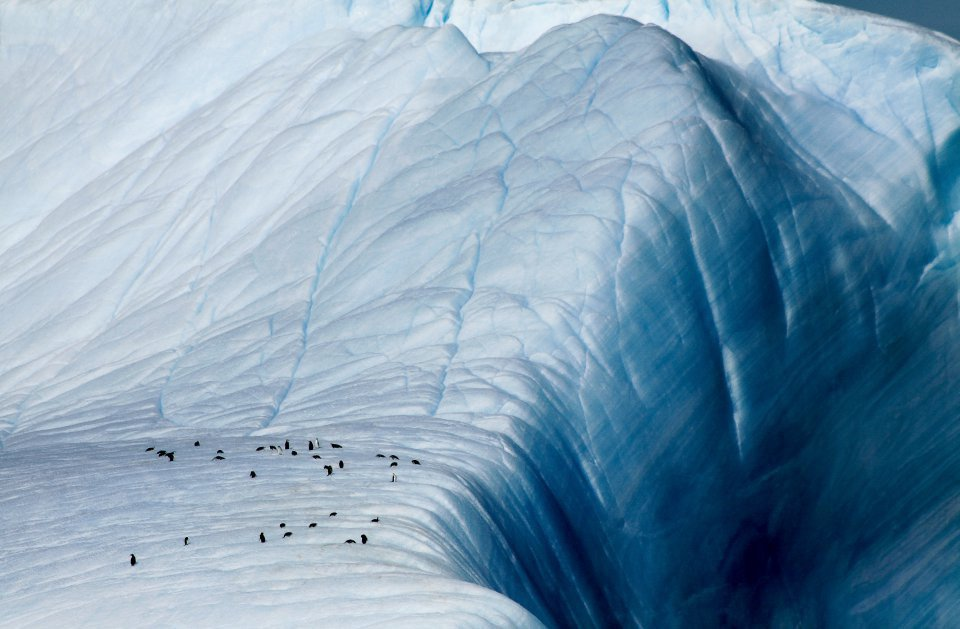 Pinguïns bij de afgrond, Antarctica