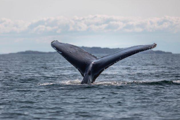 Whale watchen op Vancouver Island