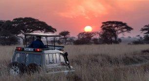 Ga op safari met je kinderen: ontdek de bijzonderste plekjes