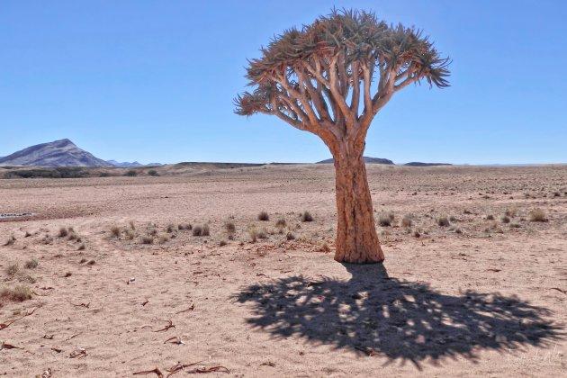 Boom of geen boom dat is de vraag ......