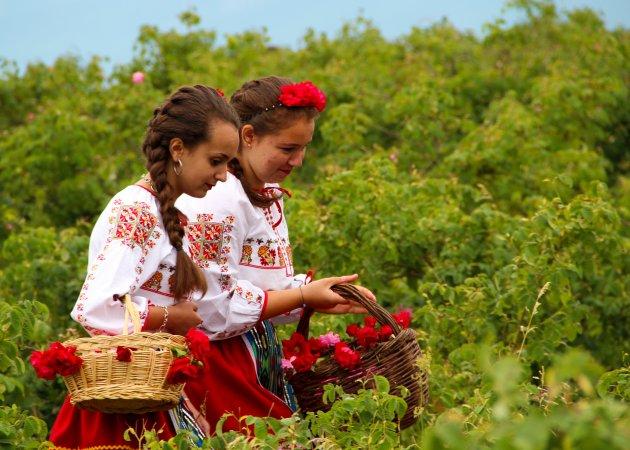 De rozen pluksters in de Rozenvallei