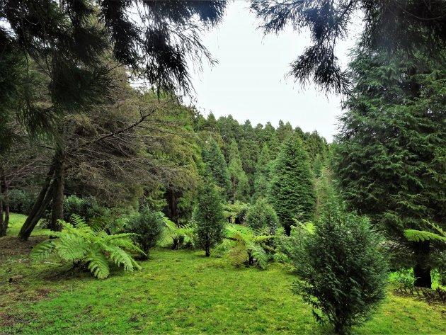 Parque Florestal da Falca