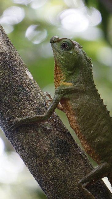 Wildlife in het regenwoud
