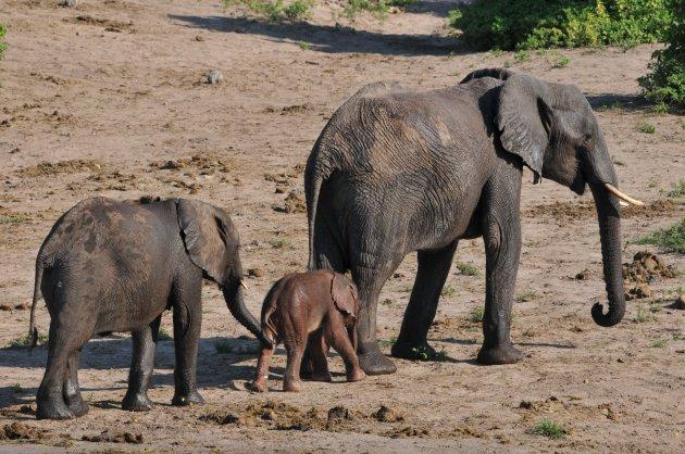 Olifanten zijn véél slimmer dan wij denken....