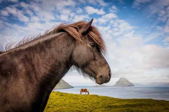 Paard of Pony?