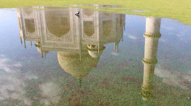 Duif op de Taj Mahal
