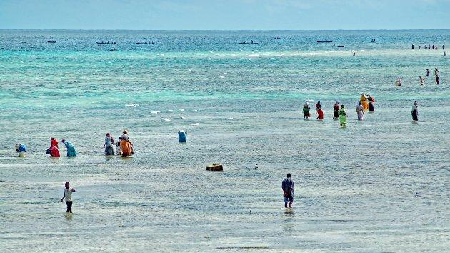 Eb op Zanzibar