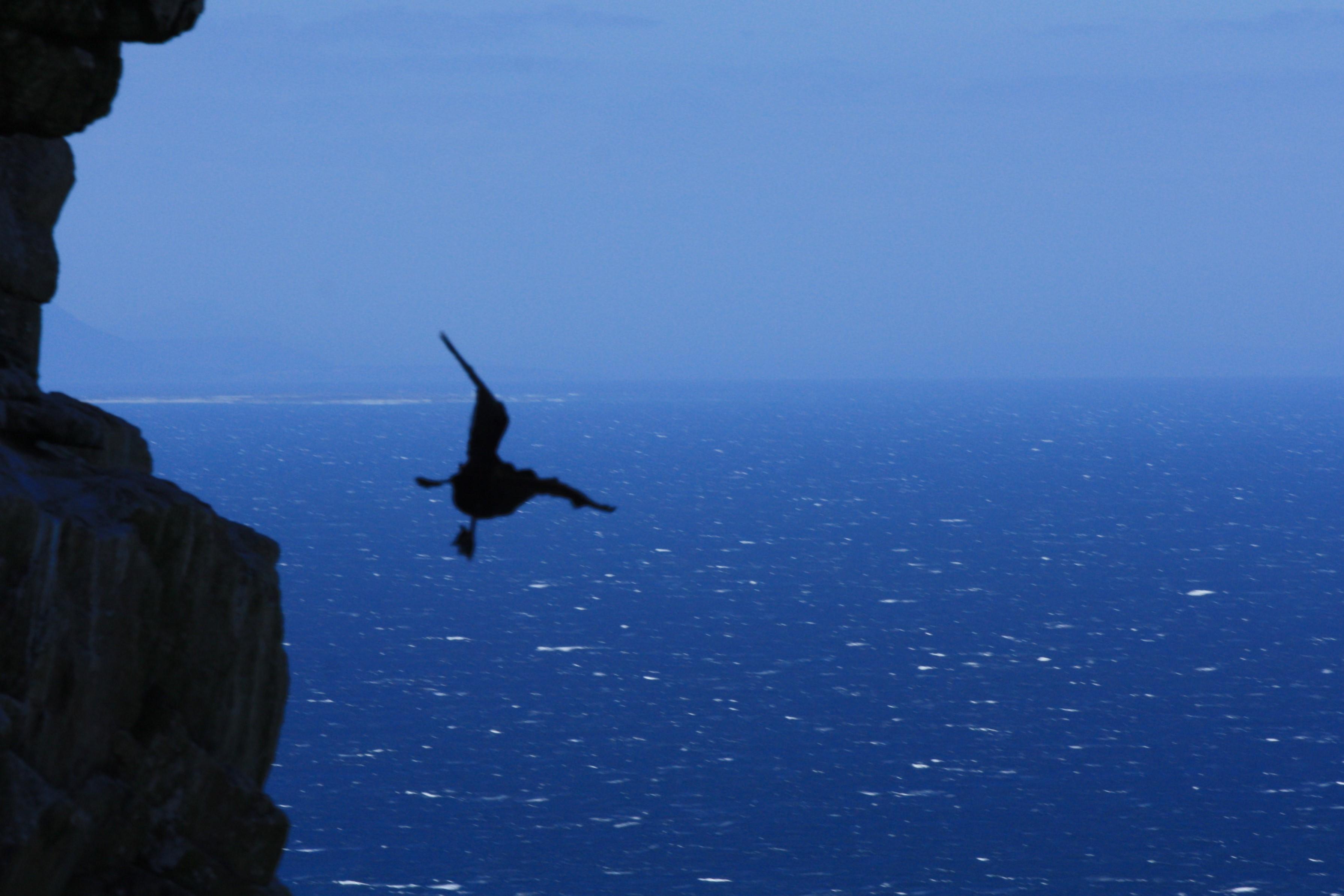 Stuntvliegen