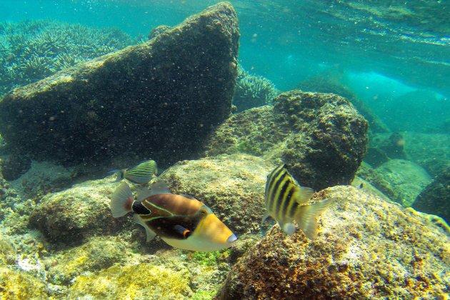 Snorkel eiland