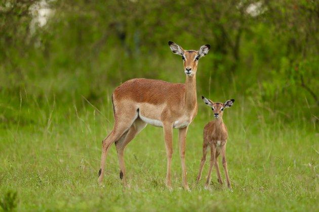 Moeder met jong