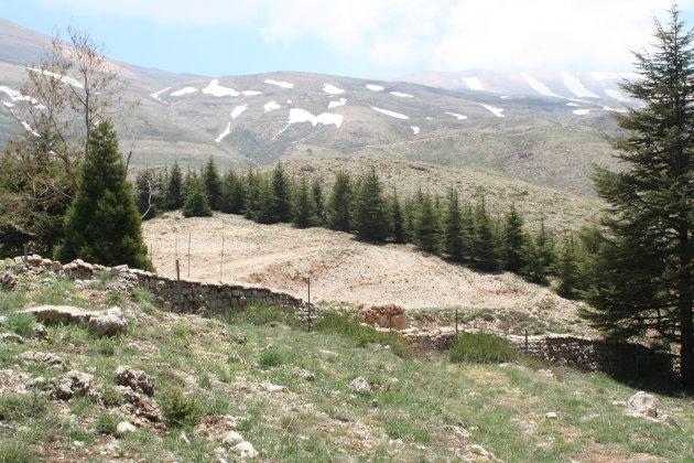 Libanon ceders