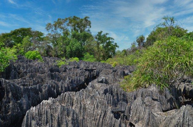 Natuurfenomeen in Madagascar.