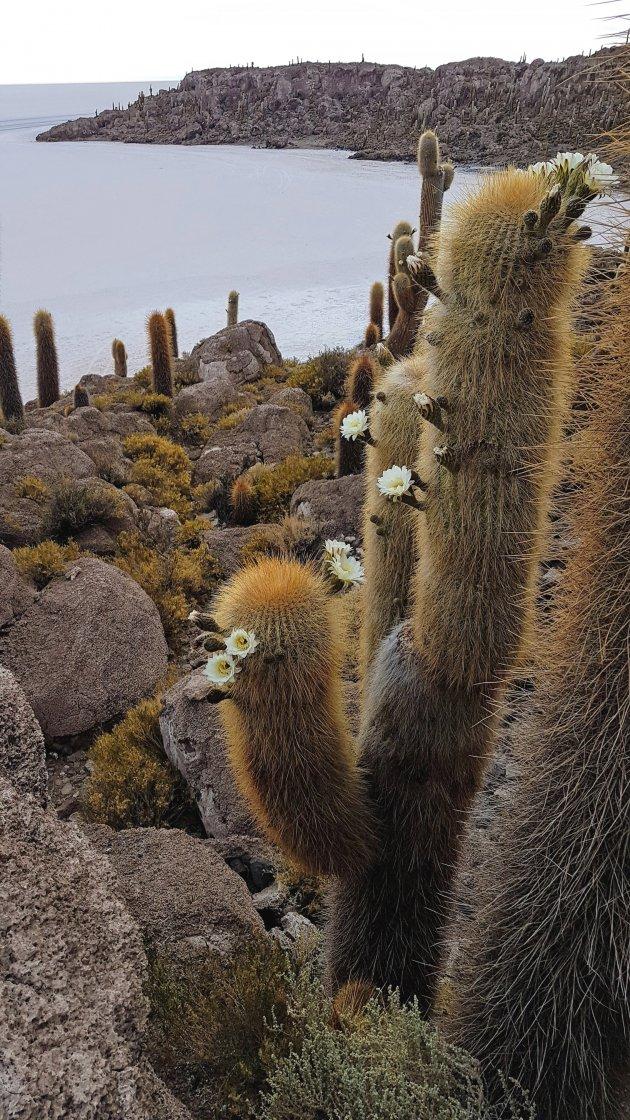 Isla del Pescado oftewel Inca Huasi Island