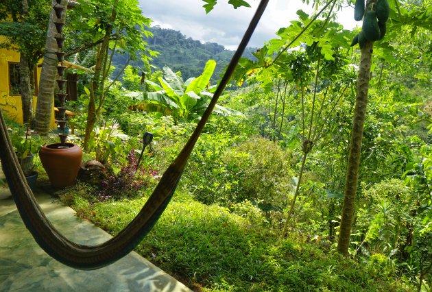 Parel in de jungle