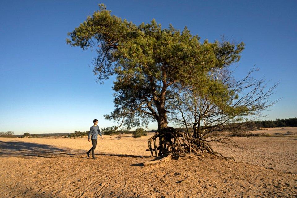 safari veluwe kootwijkerzand