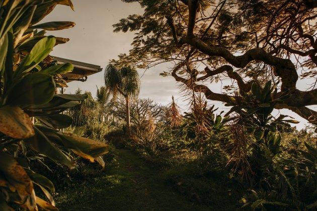 Magische tuin