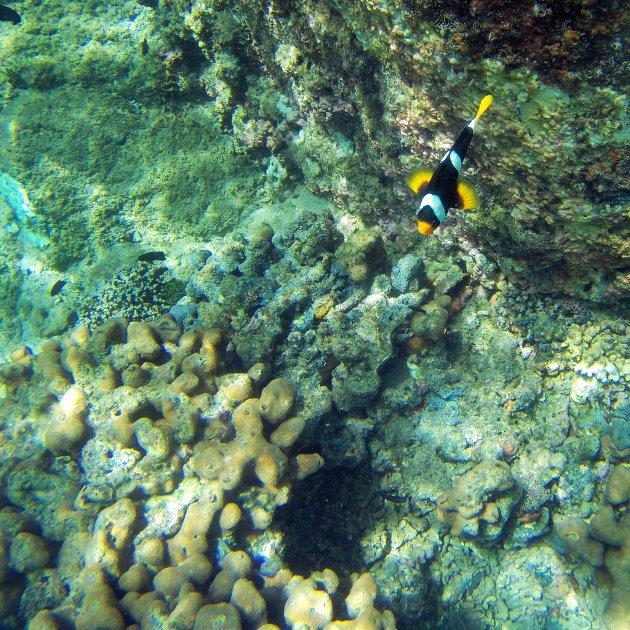 Kleurrijke vissen