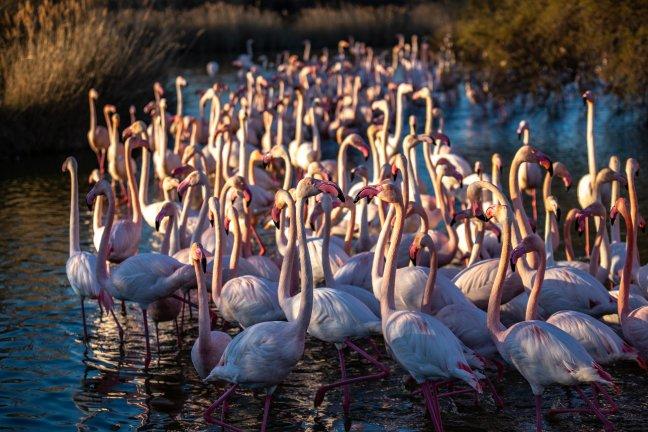 Onrust bij de flamingo's