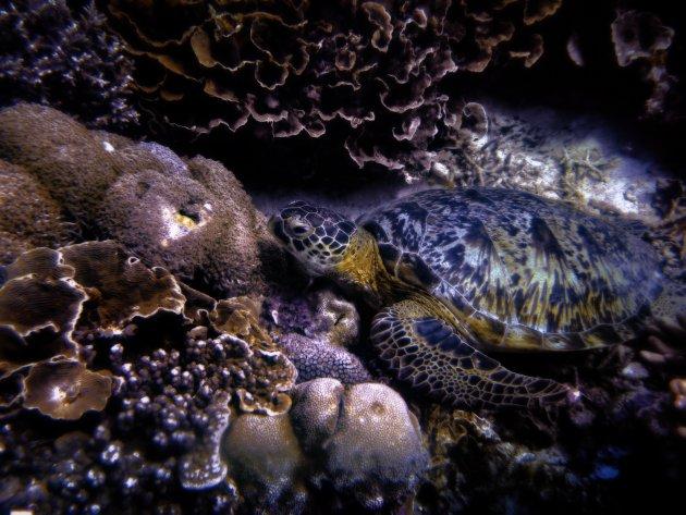 Schildpadden in allerlei soorten