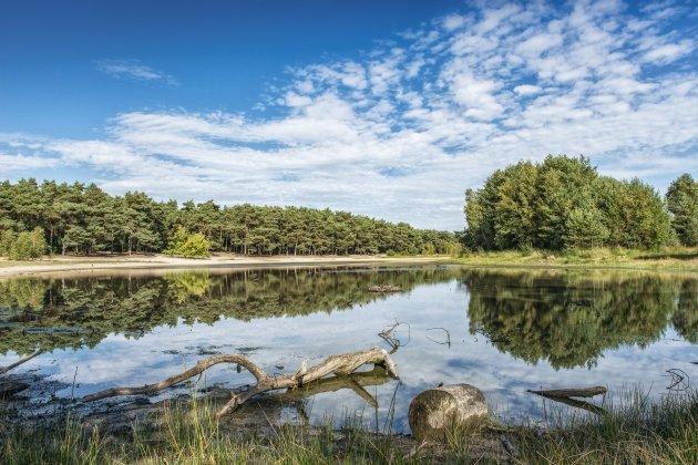 Natuurgebied de Maashorst.