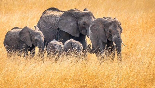 Familie-uitje in het gras