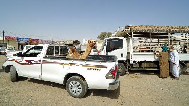 Vooruit met de kameel!