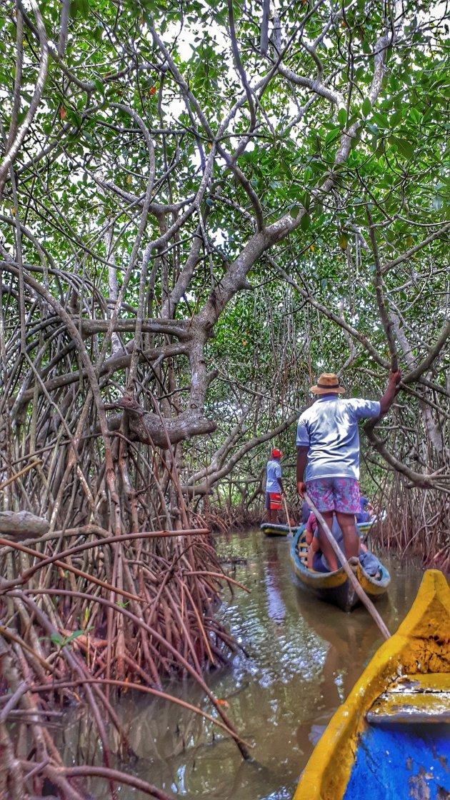 door de mangrove