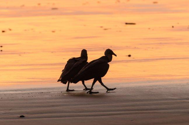 Op wandel langs het strand