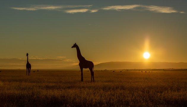 Ochtend in Masai Mara