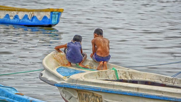 Jonge vissertjes in de dop