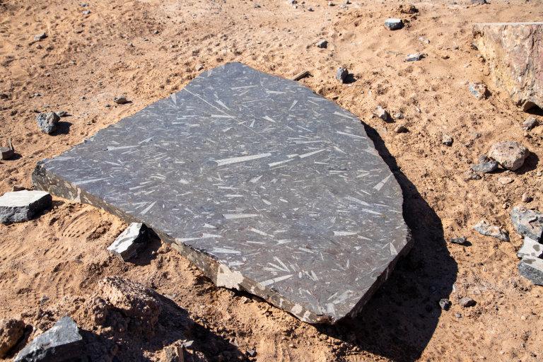 Hoofdfoto bij reisverhaal 'Zelf fossielen zoeken.'
