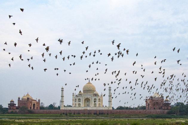Vogels bij de Taj Mahal