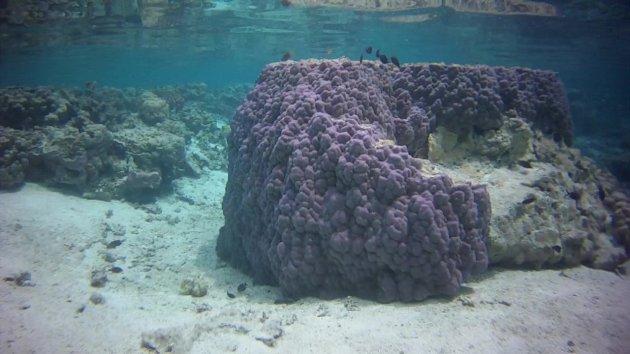 Onderwaterparadijs