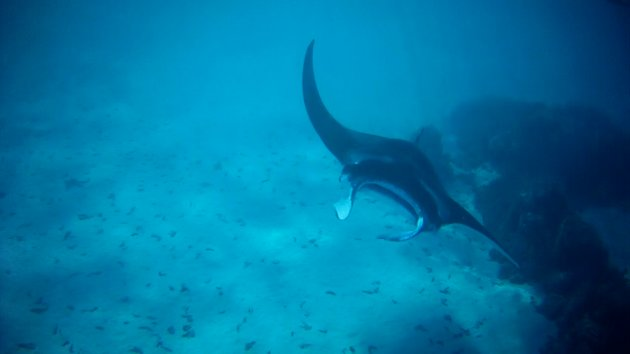 Vandaag: World Oceans Day