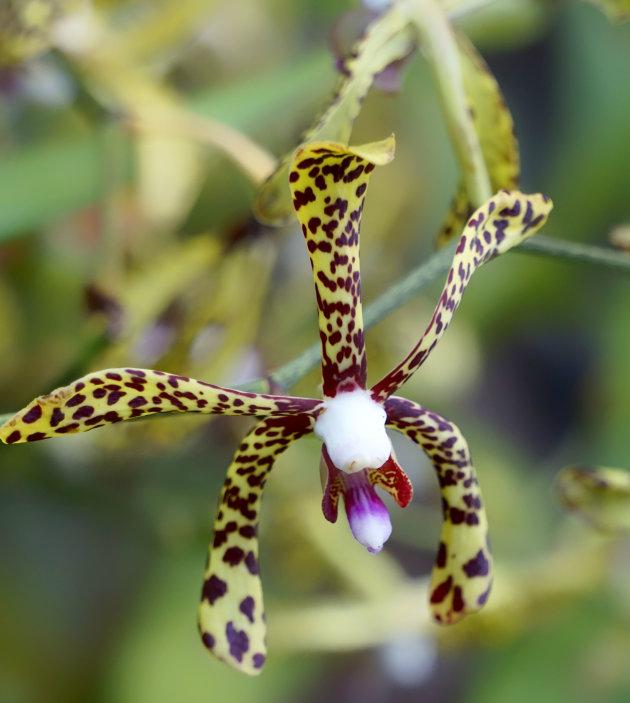 Orchideeënpracht Flowerdome