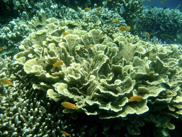 Kunstig koraal