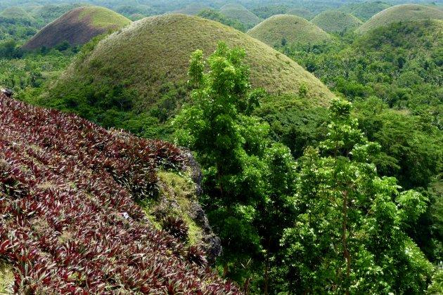 Green chocolate hills
