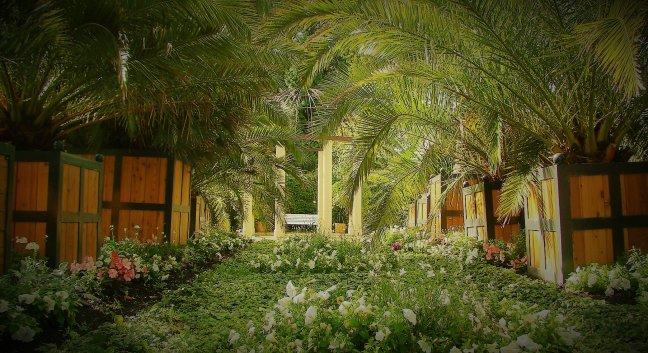 onder de palmen