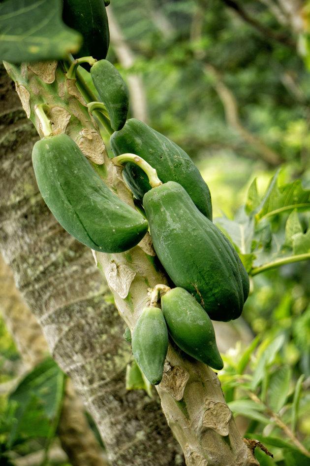 Verse papaya's