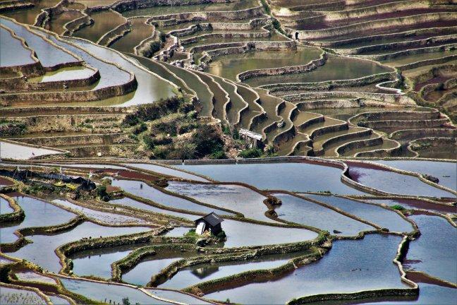 Wandelen tussen de rijstterrassen