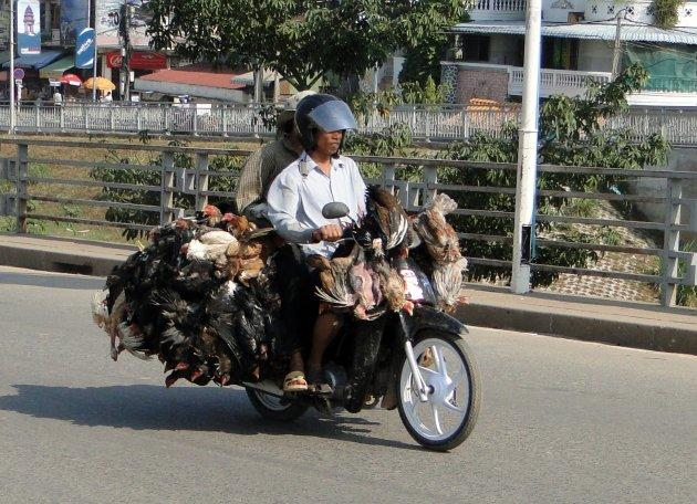 kippentransport
