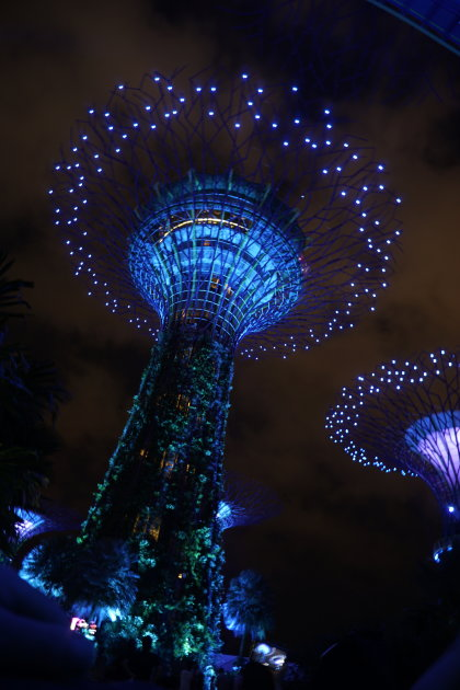 Supertrees of Singapore