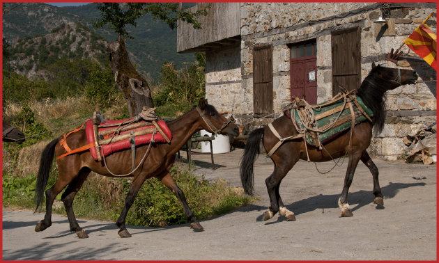 Paardenkracht in Modric