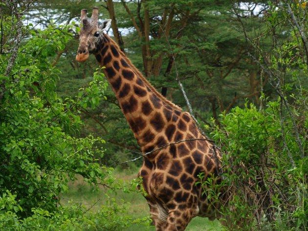 Snel op safari.....