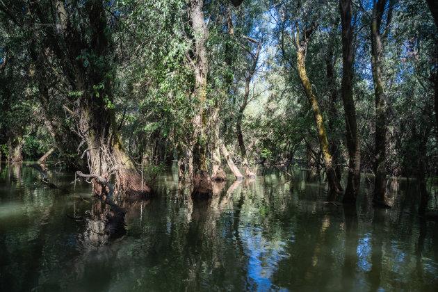 De Donau- delta
