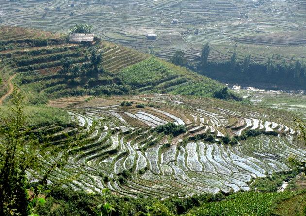 rijst-bergen
